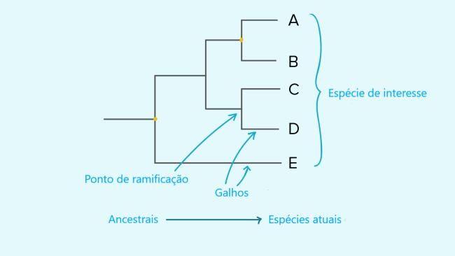treephilo