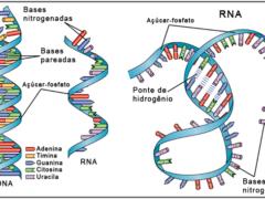 RNA - Estrutura