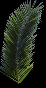 Folha da palmeira