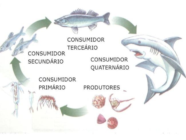 cadeia alimentar aquatica