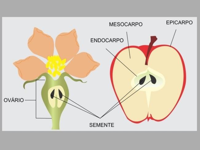 flor fecundada